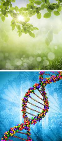 Natur und DNS